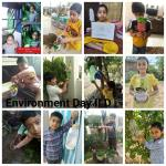 World environment day 2020 classll : Classll